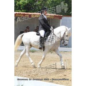 concours-de-dressage-ecurie-les-granmoulieres-27-mai-2012 / club-elite-libre-concours-de-dressage-ecurie-les-gramoulieres